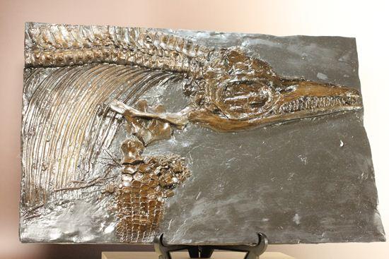 イクチオサウルスレプリカ化石