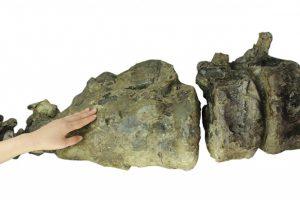 トリケラトプスの本物骨化石に触れるイベント