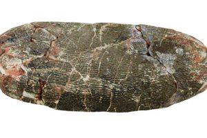 本物の恐竜の卵(たまご)にタッチできるイベントのレンタル