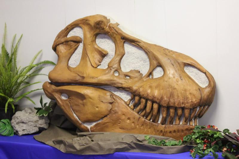 採用された、ティラノサウルス反面頭骨