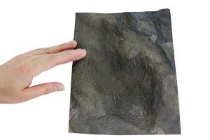 恐竜レンタルタッチ化石