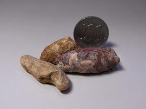 2億年前の小型肉食恐竜、コエロフィシスウンチ化石