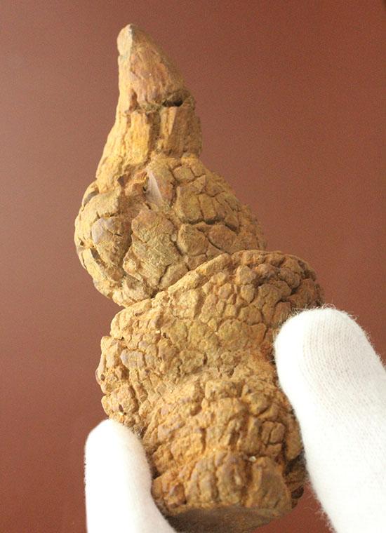 古代の水生生物のウンチ化石