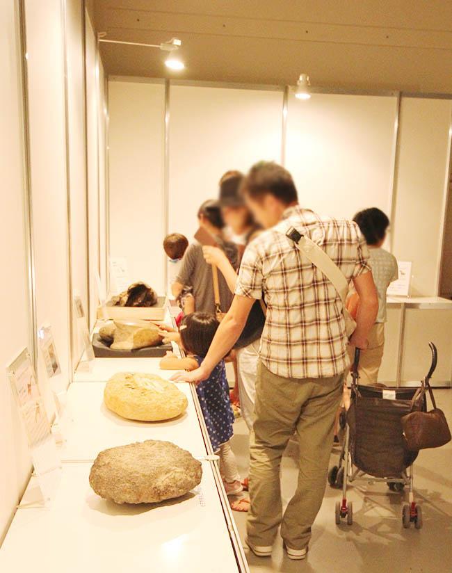 大人も子どももタッチ化石に触れて大興奮