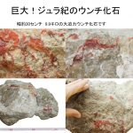 恐竜の糞化石