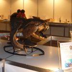 世界的標本、ダンクルオステウスの頭骨